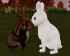 Cute Rabbits in Love