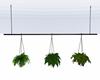 :3 Hanging Plants