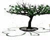 shamrock tree