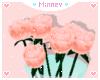♡ Peach Rose