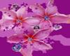 frangipani and gems