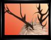 Deerina l Antlers