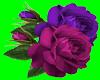 [AR]Roses