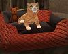 Charme / Cat