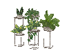 Sunny's Potted Plants