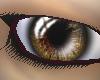Gold eyes [F]