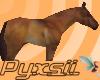 Yourhorse~*Lady*~(p)