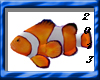 (K) NEMO the Clownfish