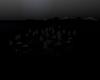 ISLA/DarkNight