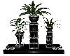 Classic Man Plant 2
