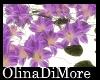 (OD) omnia ground flower