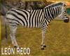 c Zebra