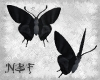 Two dark butterflies