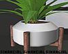 Minimal Plants