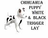 CHIHUAHUA/WHITE/BLACK