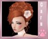 *C* Bella Wedding Ginger
