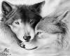 cuadro lobos 3