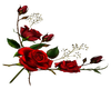 Red Rose- L