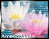 AM:: Lotus Flower Enh