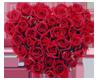 roses heart [sticker]