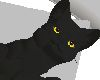 black cat with pillow