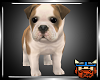 !P! Bulldog Puppy.