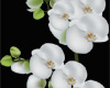 *R* White Orchid