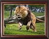 cuadro leon
