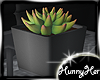 Succulent Small