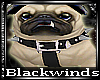 BW|Spike the Pug+Actions
