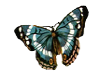 teal butterfly 2