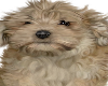 Sweet Puppy  Dog