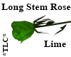 *TLC*Long Stem Rose Lime