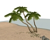 (ED1)Coconut Tree