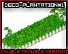 !AsterMS*Plantation#1