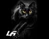 [LA]BLACK CAT FRAME