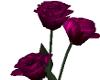 Magenta Valentine Roses