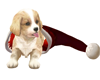 FN Christmas Puppy