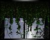 [X] Hanging Ivy