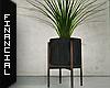 ϟ Modern Indoor Plant