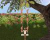 Spring Fields Swing