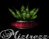 !Miz  Snake Plant