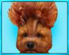Poodle Puppy Sit