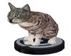 ~N~Cat on Vaccum
