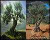 Olive Trees Backgrounds