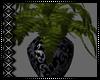 Rainy Plant v1