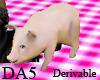 (A) Pet Pig