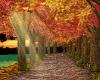 [BM] Fall Lake Walkway