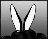 Bunny Ears F / M