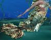 Mermaid / Full Outfit